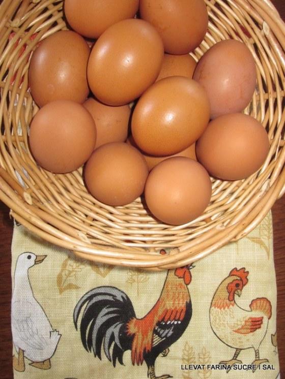 Regals autèntics, gallines ponedores de l'Eric 003
